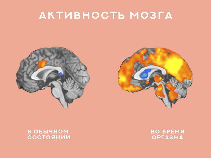 18+ Что происходит с мозгом во время секса?